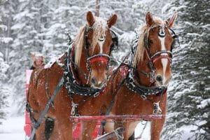 golden-horseshoe-sleigh-rides