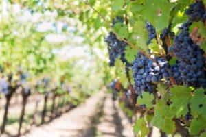 Vines at Vail Winery