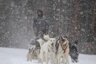 winter-hawk-dog-sled-adventures